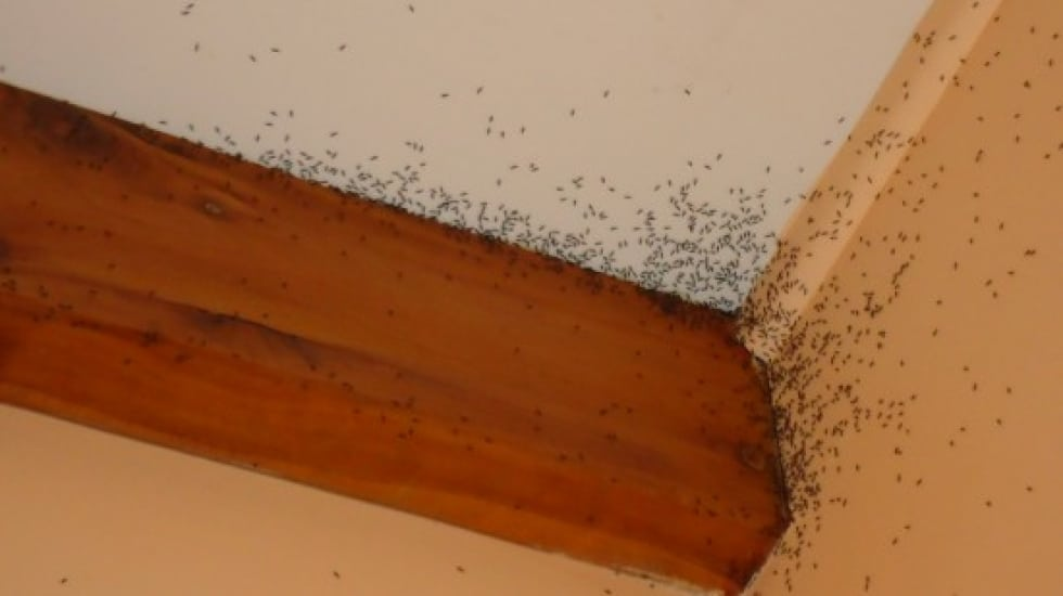 How To Get Rid of Ants | Ant Removal