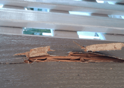 white ant damage needing removal after termite treatments