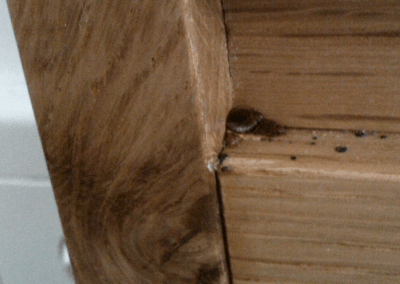 white ant damage needing removal after termite treatment