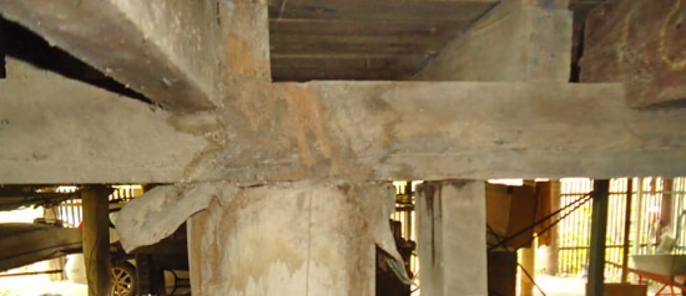 Treated Timber Does Not Mean You're Safe From Termites