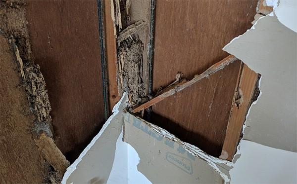 building termite damage needing termite exterminators
